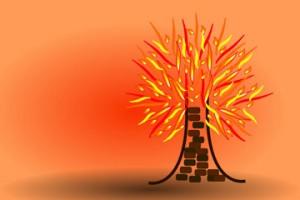 Burning-bush-shutterstock_2137557
