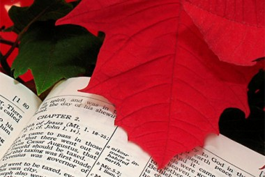 Christmas Readings.Daily Christmas Readings New Church